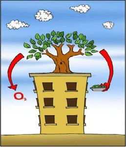 زراعة الأسطح من المشروعات التي تحافظ علي البيئة
