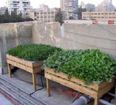 النظام البسيط لزراعة الأسطح