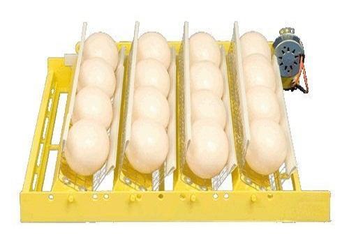 التفريخ الآلي: تفريخ بيض النعام آلياً