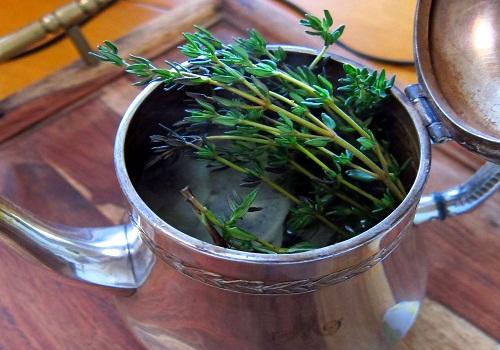 شاي-الزعتر - مشروع زراعة الشاي