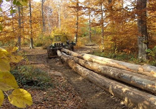 خشب الزان - الحفر على الخشب، مشروع الحفر على الخشب