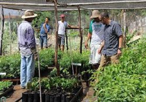 كيفية-زراعة-وخدمة-شجيرة-الشاي
