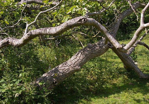خشب الجوز - الحفر على الخشب، مشروع الحفر على الخشب