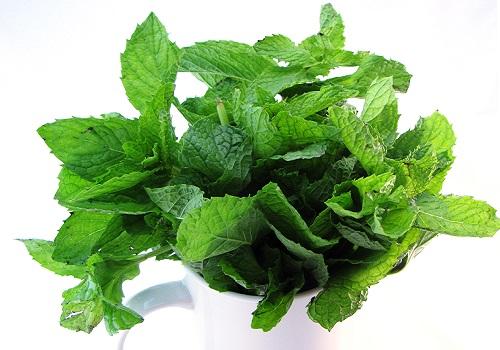 النعناع - النباتات العطرية والطبية