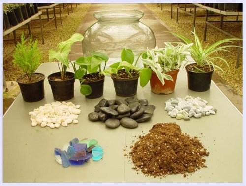 دراسة جدوى زراعة نباتات الزينة
