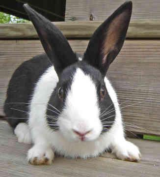 خطوات مشروع تربية الأرانب