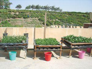 خطوات مشروع زراعة الأسطح