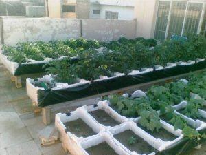 زراعة الأسطح