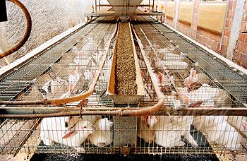 مزارع الأرانب