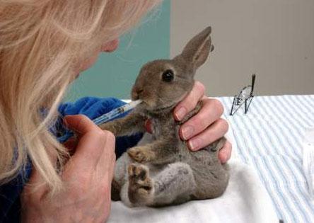 أمراض سوء الرعاية للأرانب
