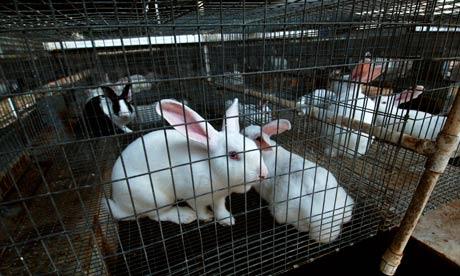 الهدف من تربية الأرانب
