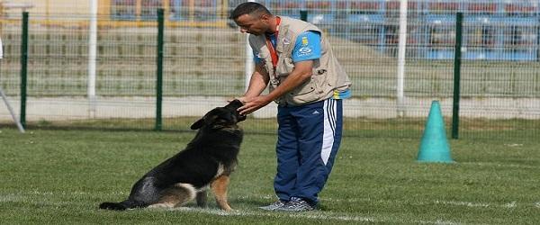 تربية الكلاب
